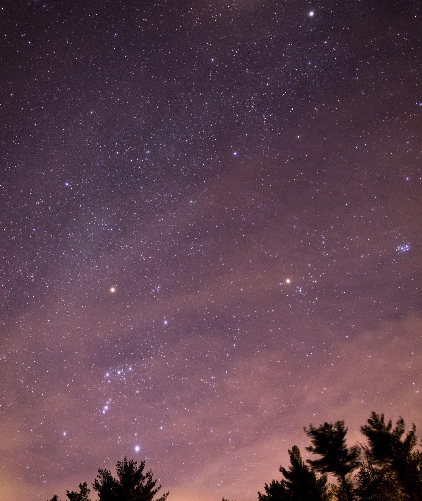 Noc Perseidów – niebo pełne gwiazd, wierzchołki świerków na horyzoncie nieba (fot. Adrian Pelletier / unsplash.com)