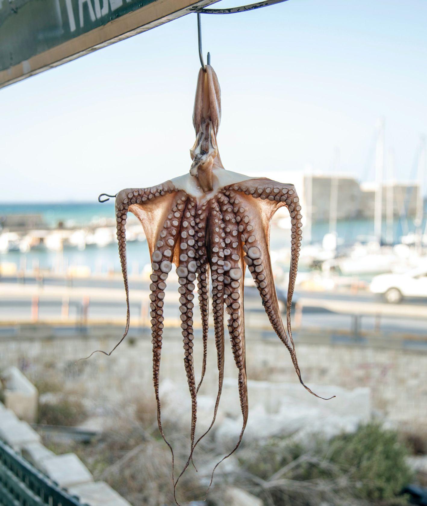 Ośmiornica na haku w porcie greckim (fot. Milada Vigerova / unsplash.com)