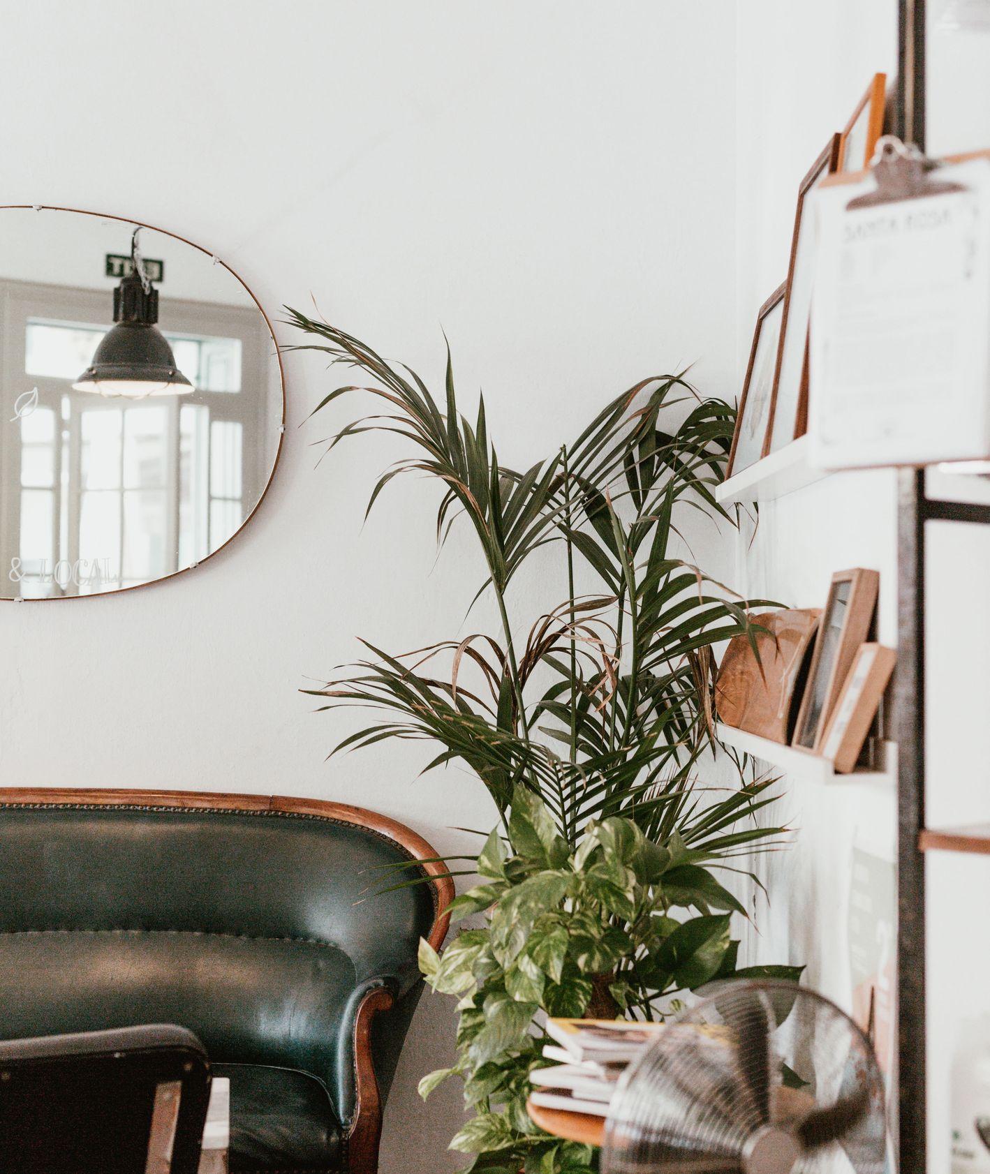 mieszkanie z roślinami doniczkowymi (fot. Marten Bjork / unsplash.com)