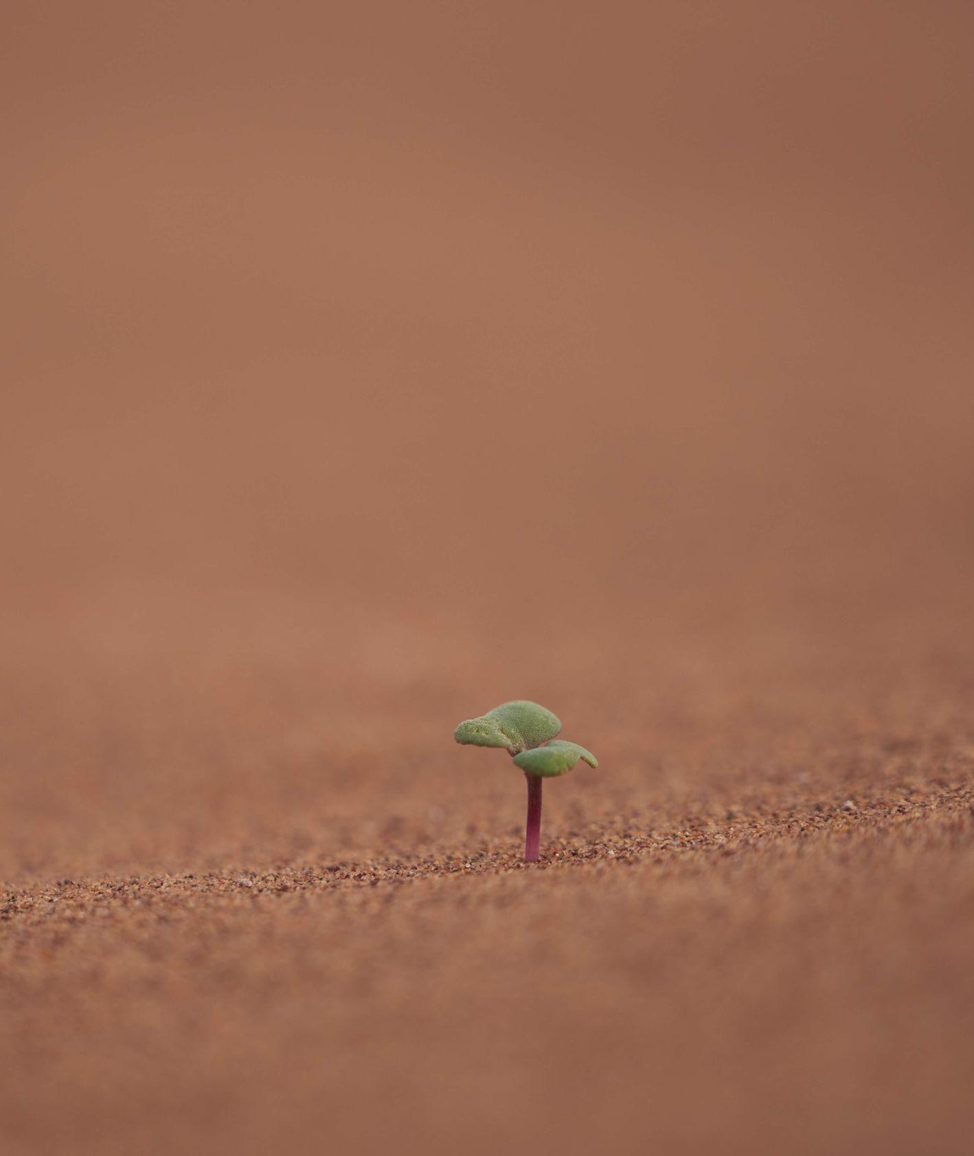 życie na Marsie, rośłinka