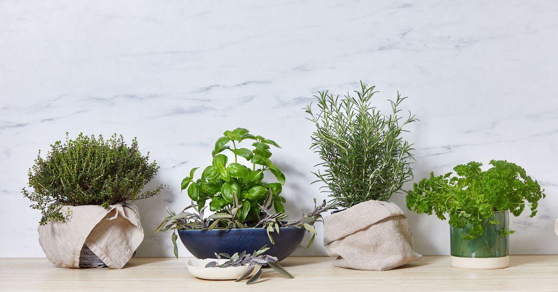 Porady jak przechowywać zioła