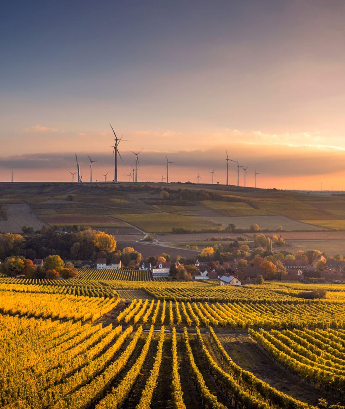 Pole uprawne z farmą wiatraków w tle (fot. Karsten Wurth / unsplash.com)