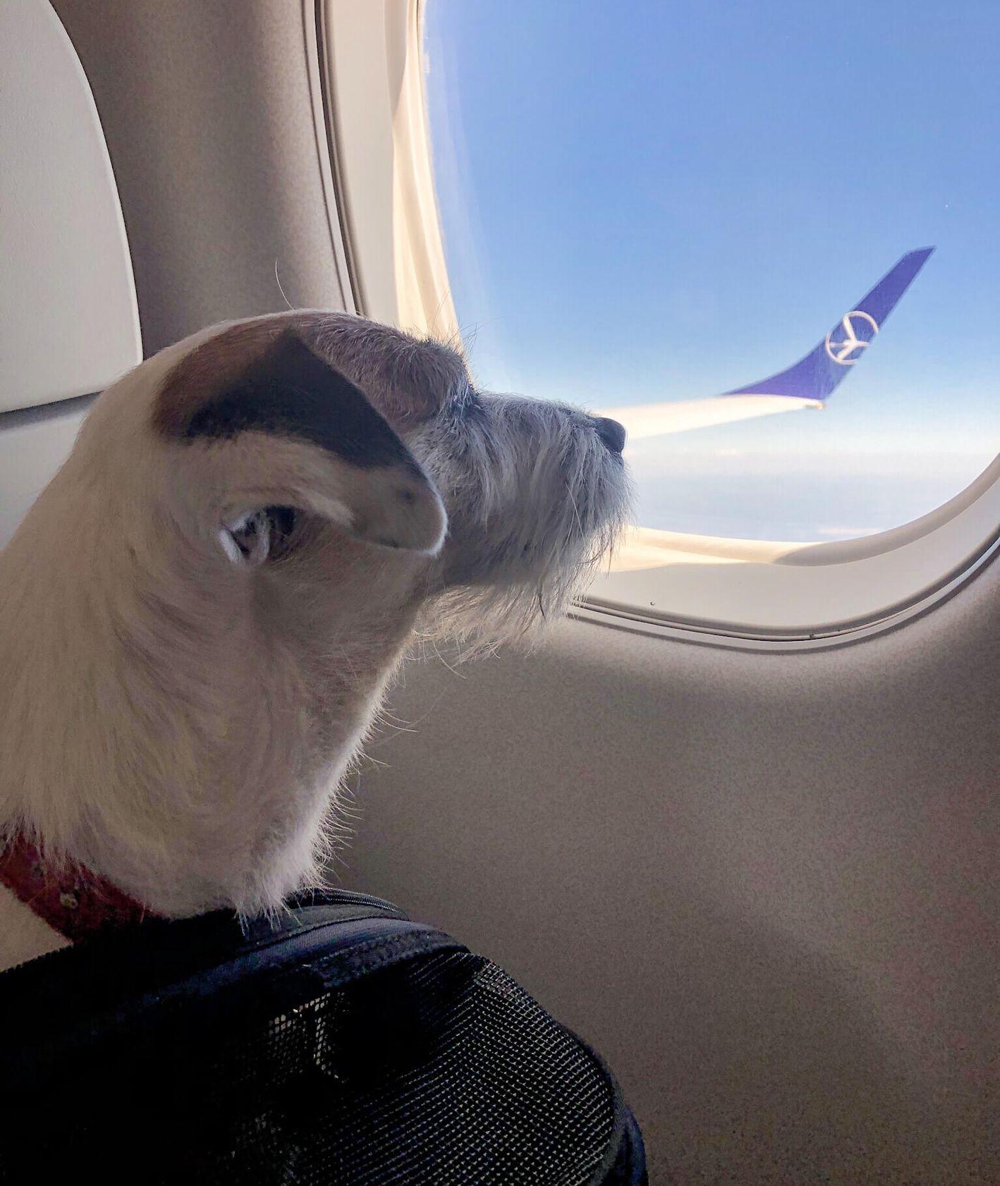 Łatka w samolocie