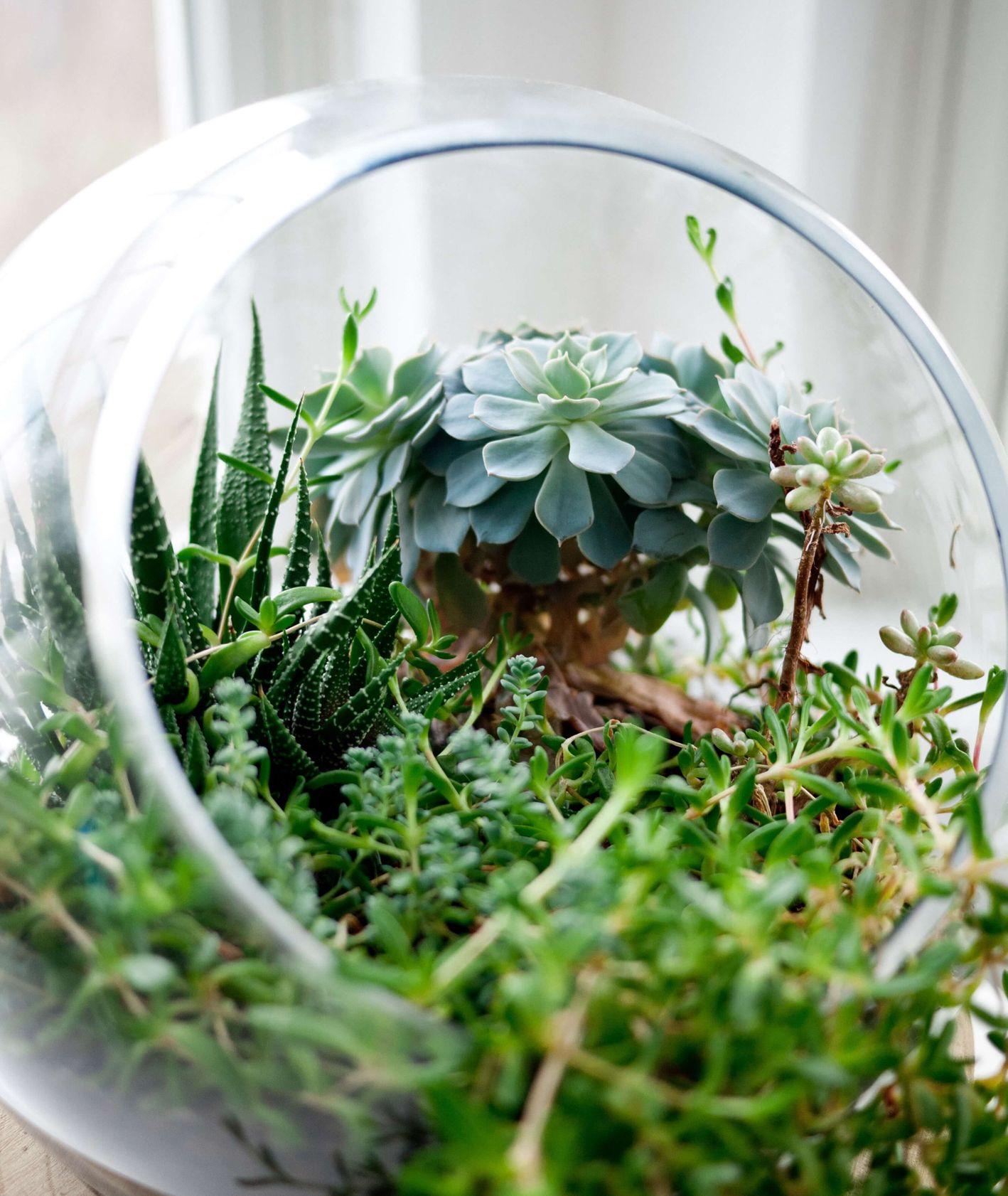Las w szklanym słoiku (fot. Jeff Sheldon)