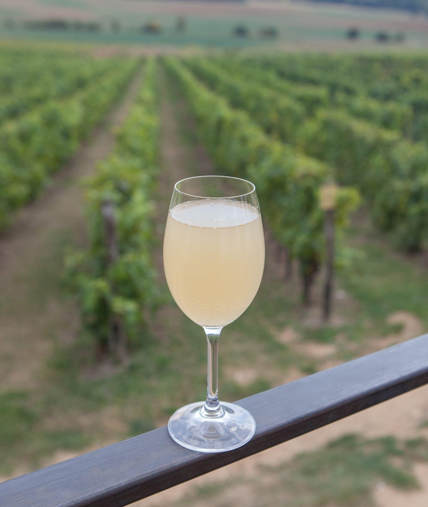 Winnica w której produkowany jest Burčak (fot. Julia Zabrodzka)