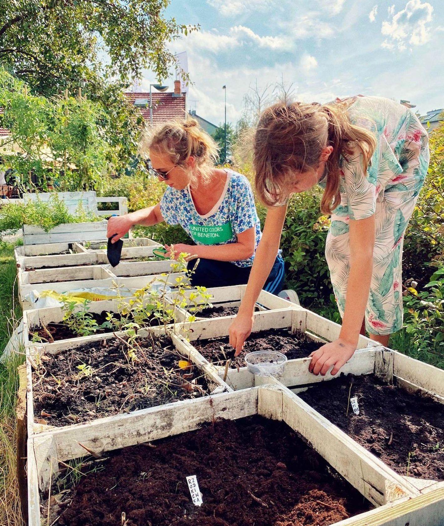 Ogród codzienny (fot. materiały prasowe)