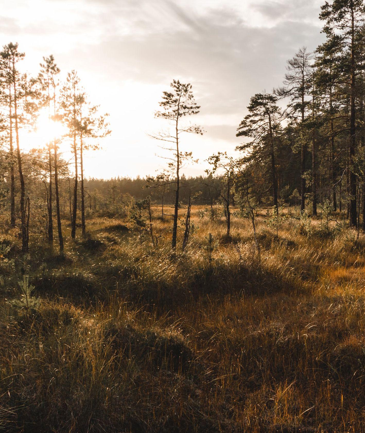 Pole wrzosowe w słoneczny, jesienny poranek (fot. Nicholas Selman / unsplash.com)