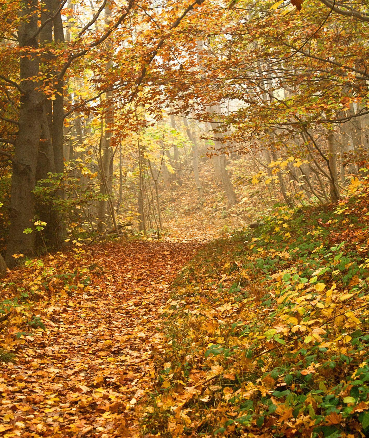 Las jesienią (fot. Vanessa von Wieding / unsplash.com)