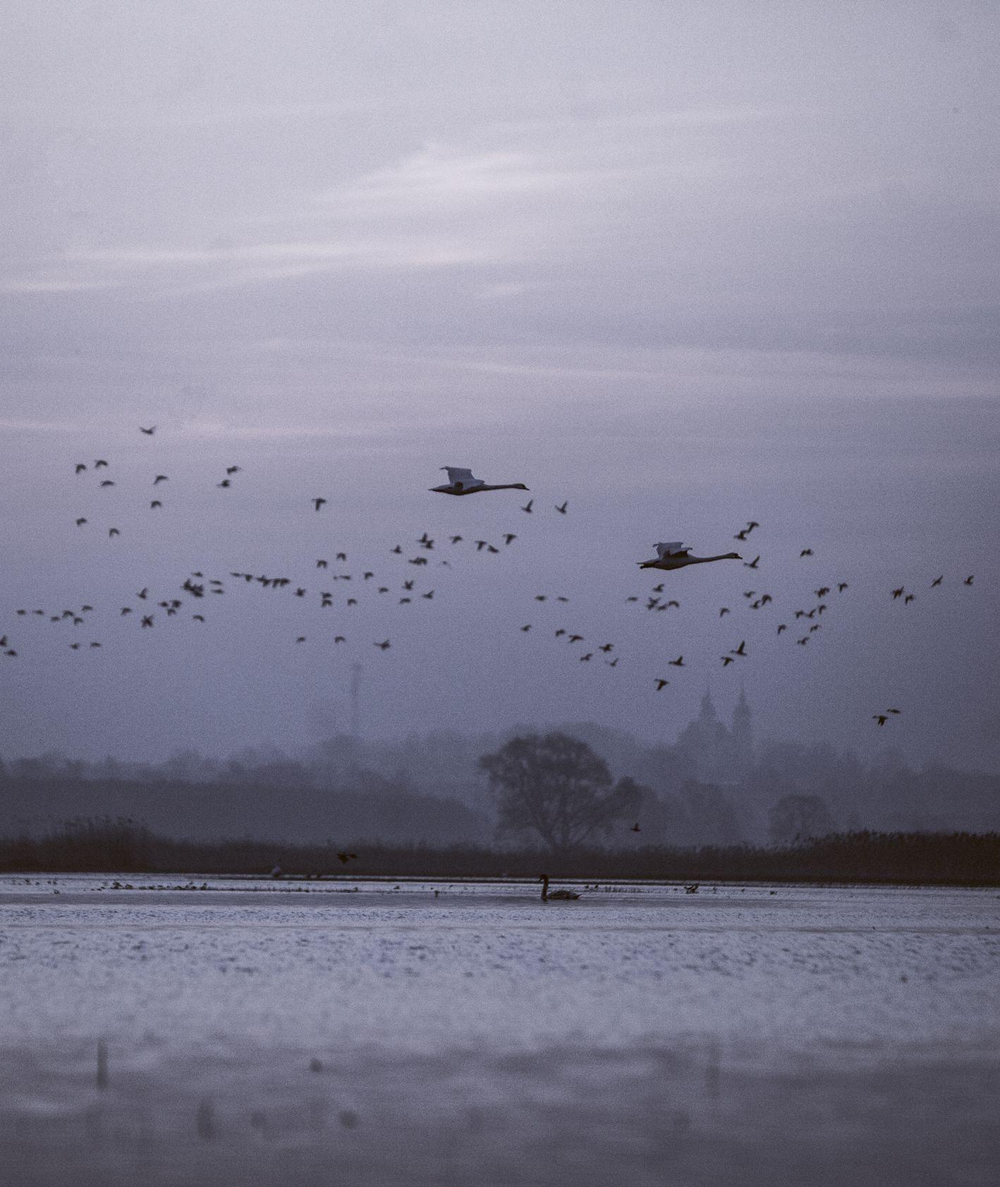 Krajobraz Biebrzańskiego Parku Narodowego, przelot ptaków nad Biebrzą, zmierzch (fot. Rafał Meszka)