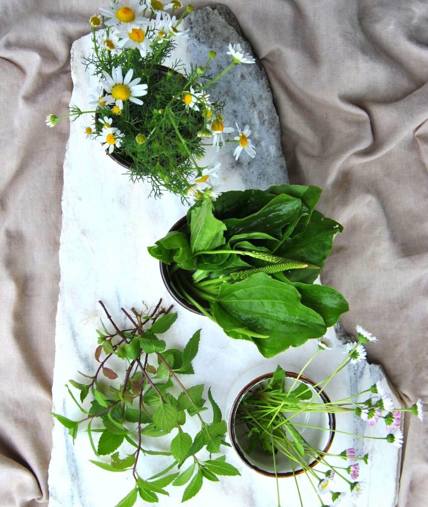które rośliny z łąk są jadalne, czy rumianek jest jadalny