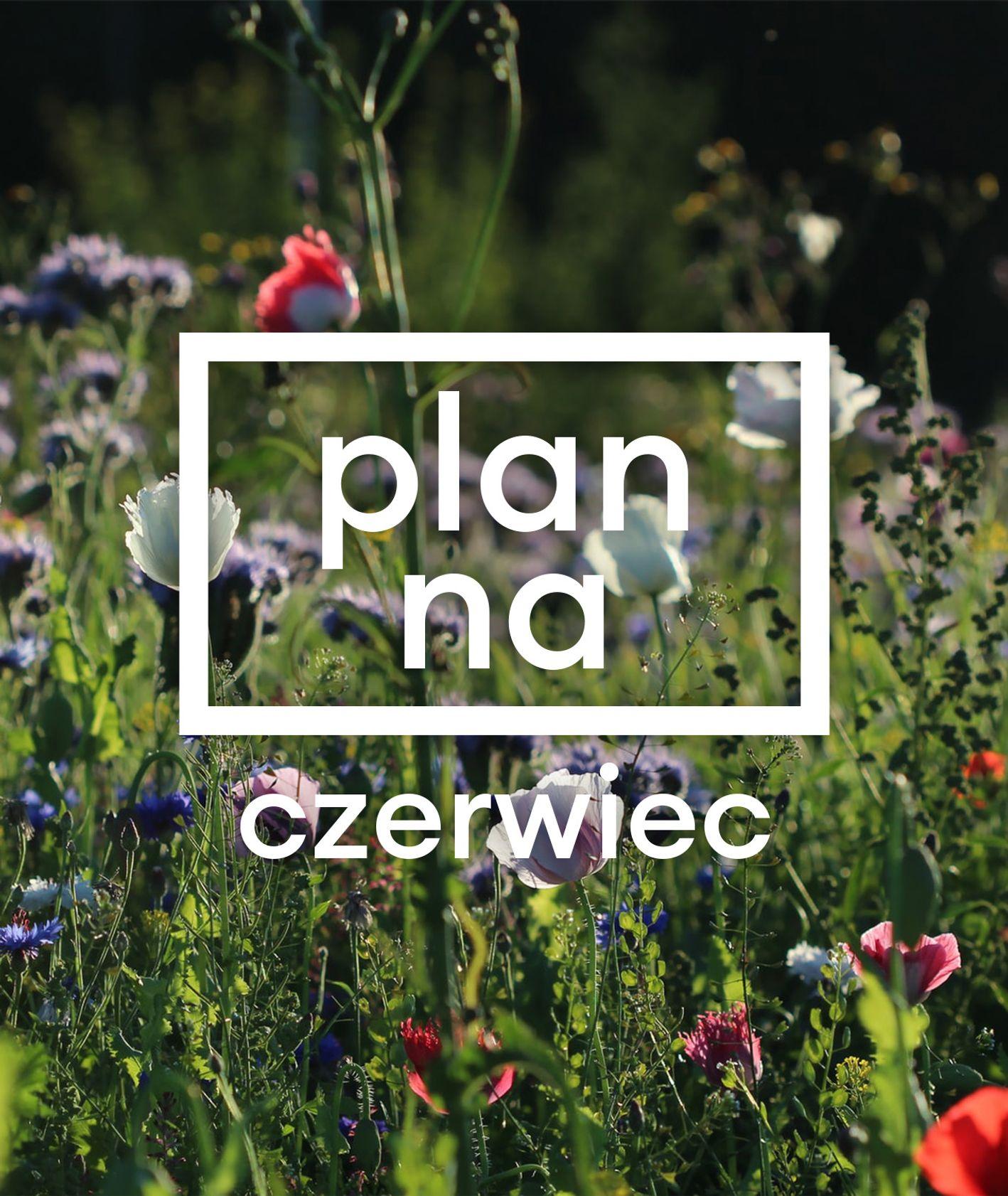 Plan na czerwiec – grafika cyklu, łąka