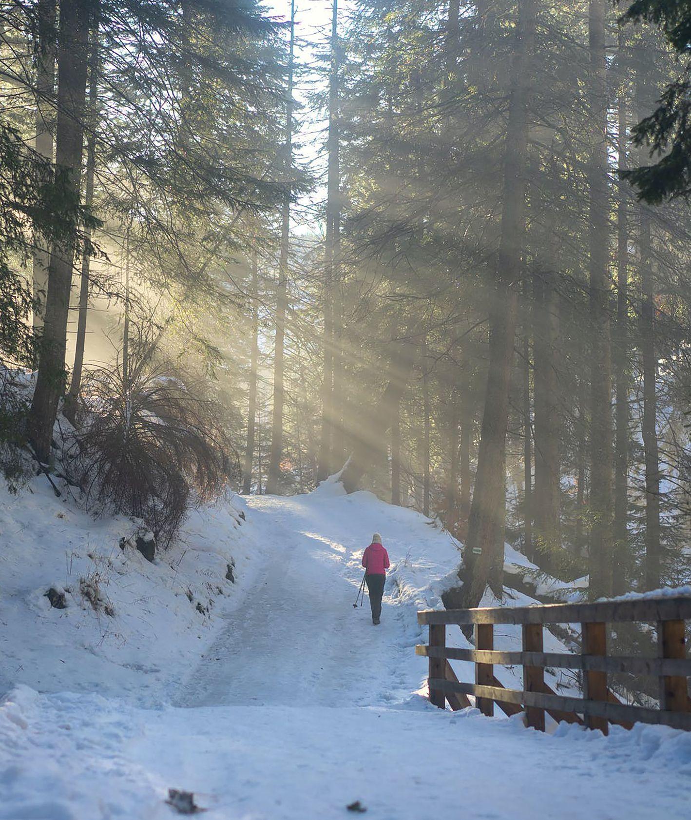 Plan na weekend. Spacer w lesie zimą. (fot. Alexandr Povalny / pexels.com)