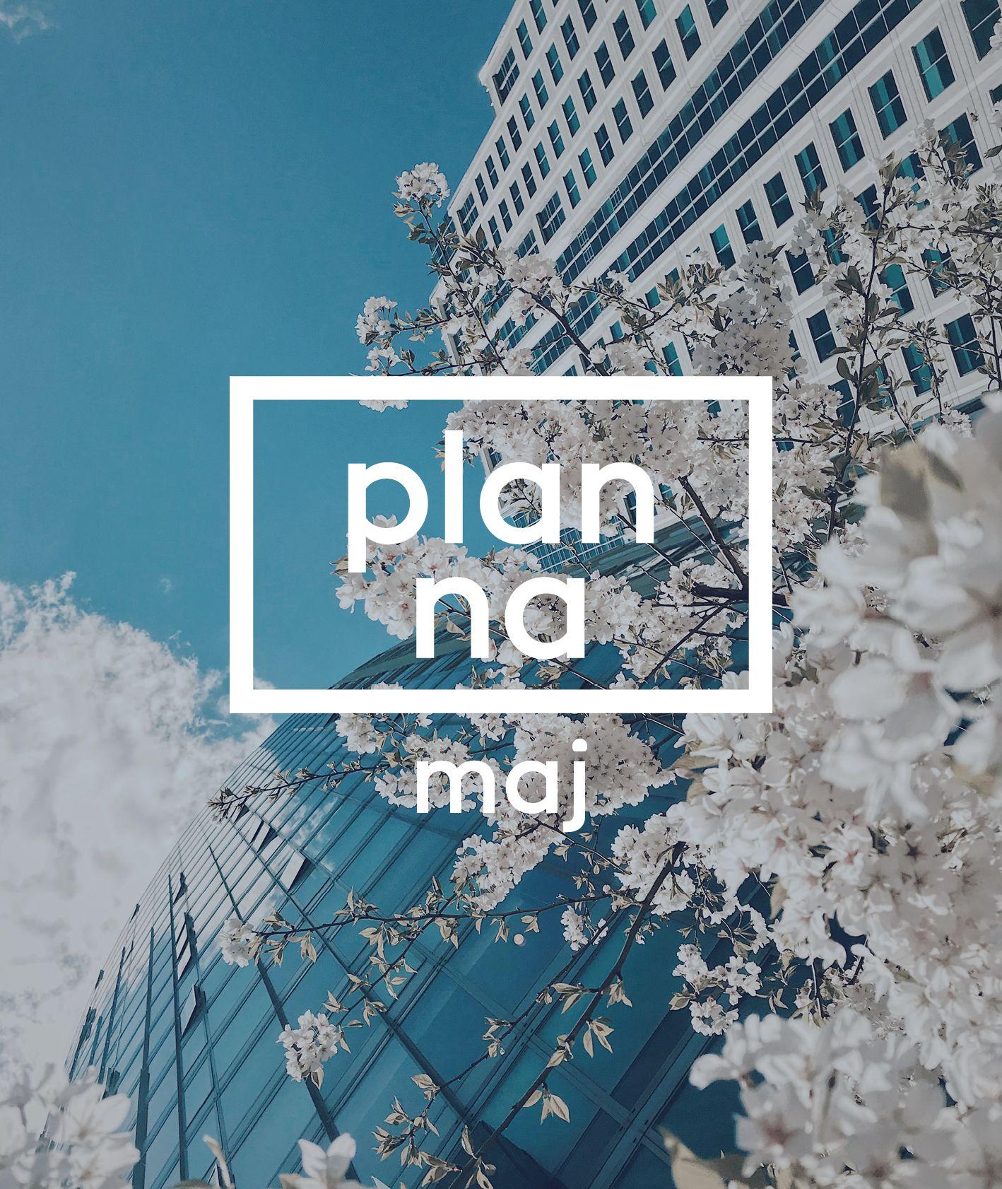 """Grafika zapowiadająca cykl """"plan na maj"""" – kwitnące gałęzie wiśni"""