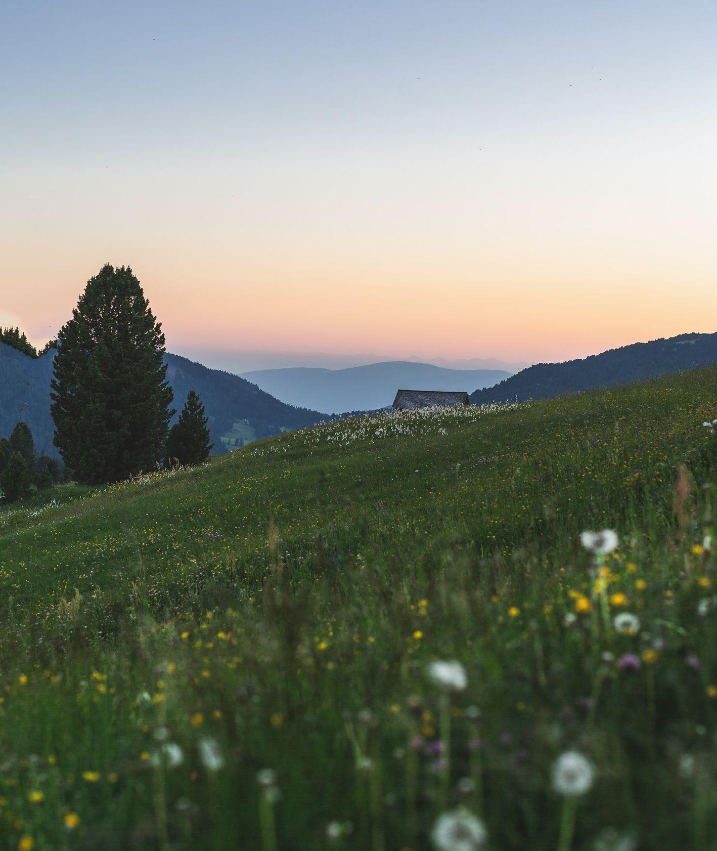 Widok na łąkę w świetle zachodzącego słońca, widoczne kwiaty mlecza i dmuchawce, w tle pagórki, drzewa i wiejska chata (fot. Eberhard Grossgasteiger / unsplash.com)