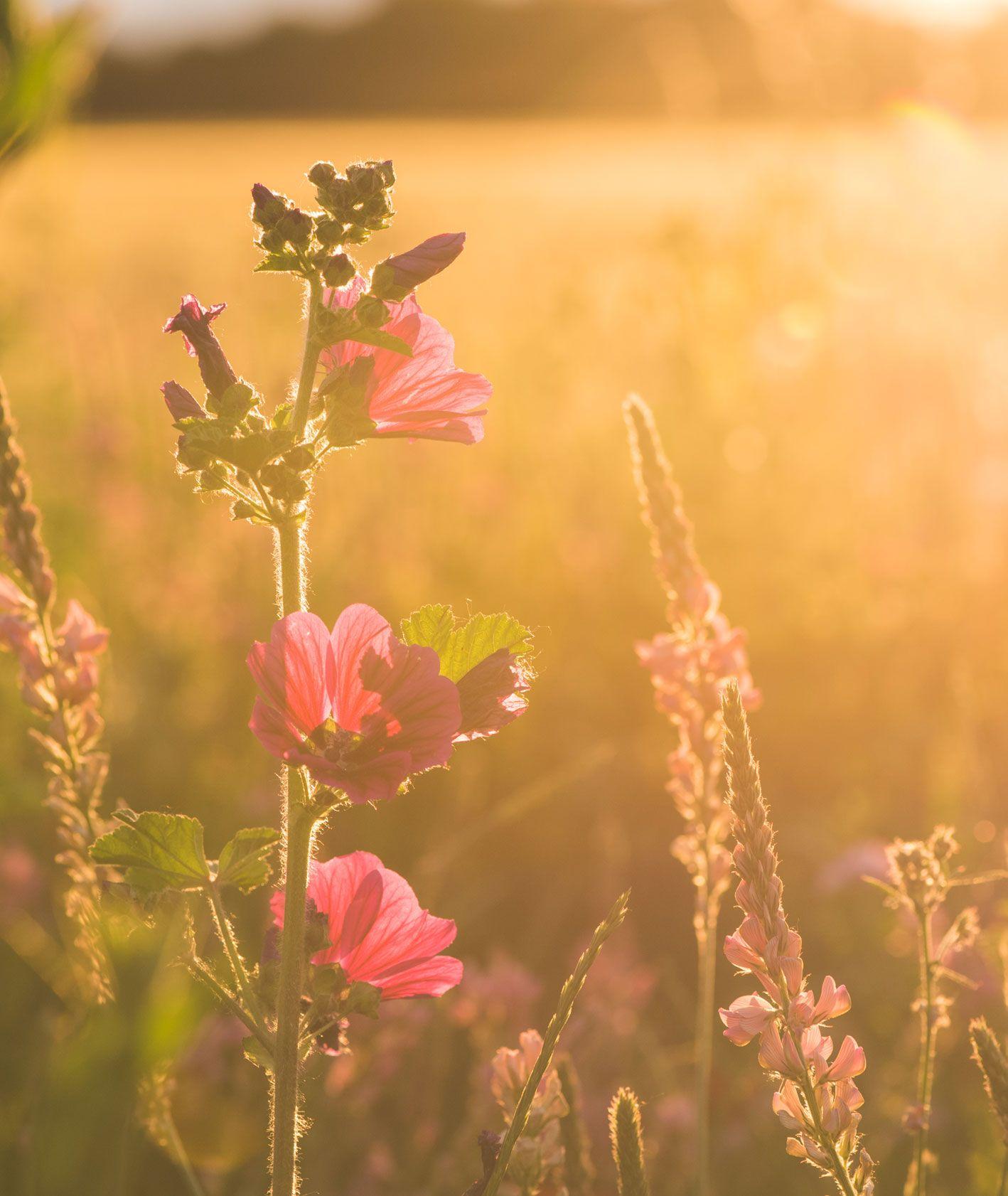 Zbliżenie na kwiat na łące