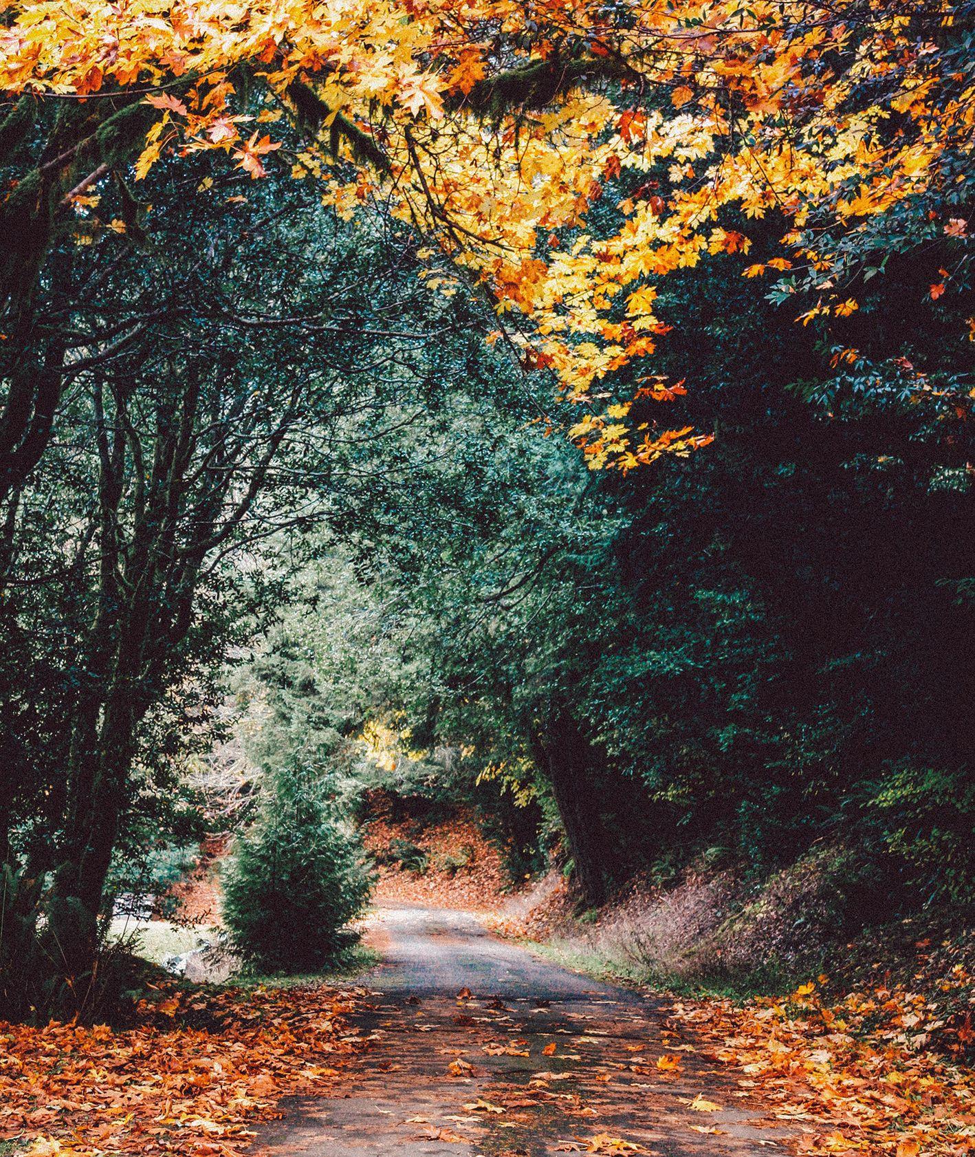 Jesienne drzewa przy leśnej ścieżce (fot. Eric Muhr / unsplash.com)
