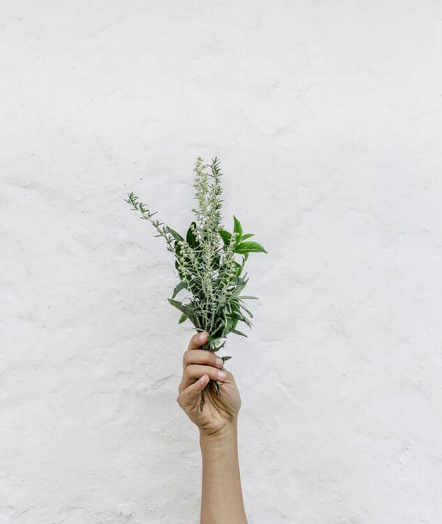 Bukiet polnych ziół trzymany w dłoni  (fot. Norwood Themes)